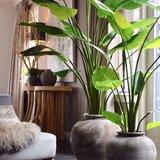 Kunstplant Strelizia groen_
